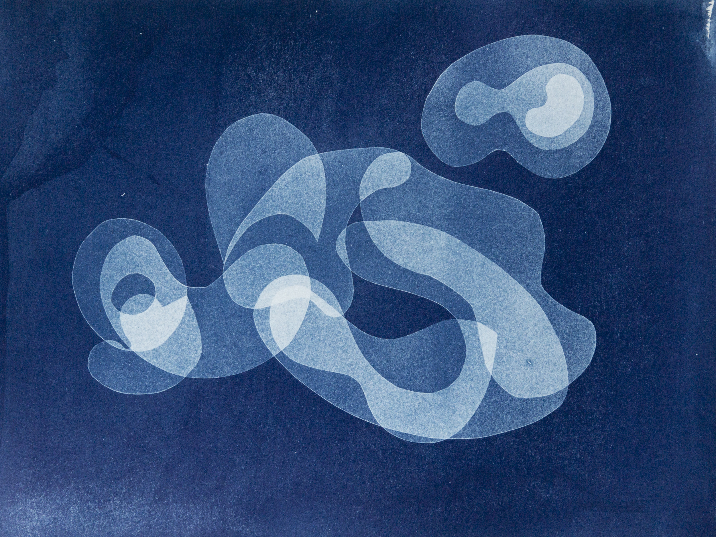 "organism lI, cyanotype, watercolor paper, 9""x12"", 2019"