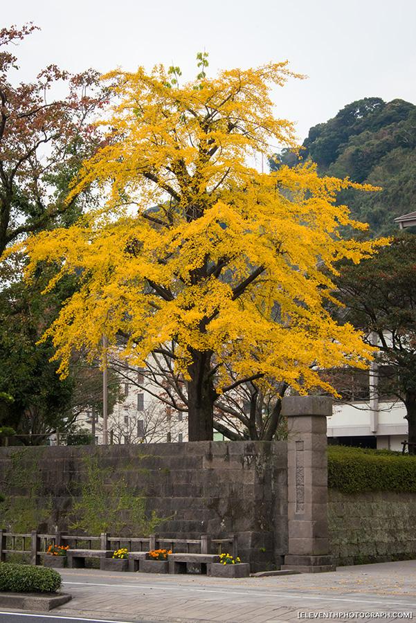 InJapan2014_196.jpg
