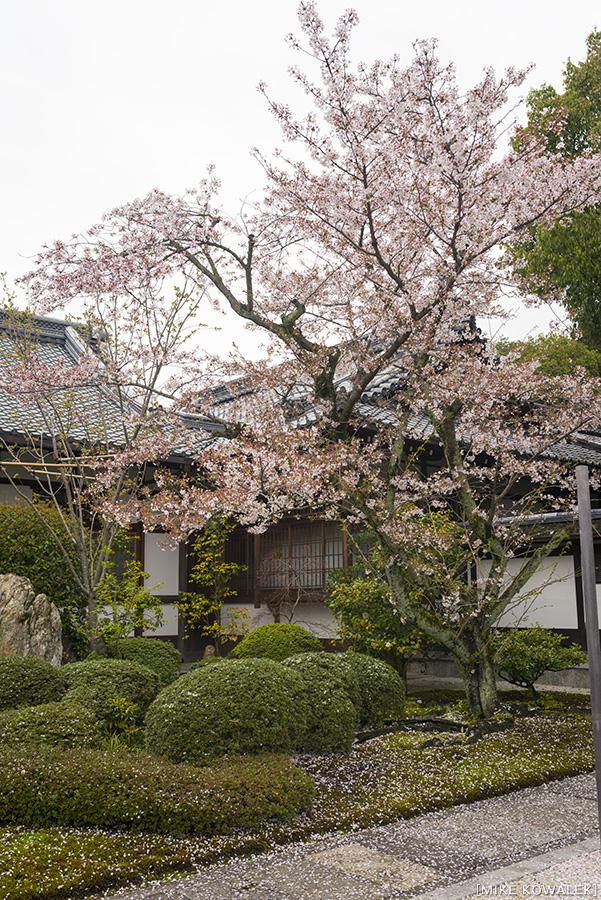 Japan_Osak&Tokyo_MK_171.jpg