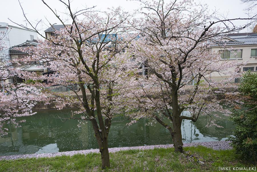 Japan_Osak&Tokyo_MK_178.jpg