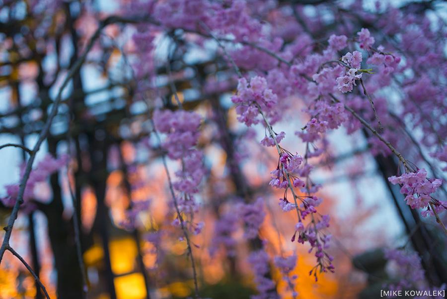 Japan_Osak&Tokyo_MK_210.jpg
