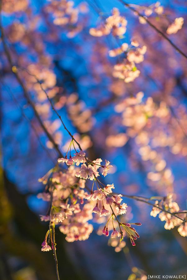 Japan_Osak&Tokyo_MK_212.jpg