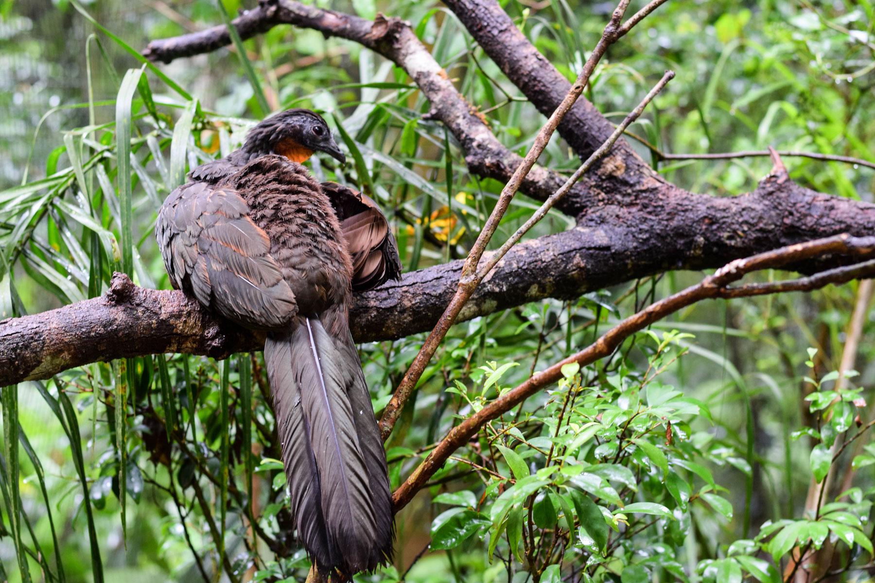 Bird-Park-9.jpg