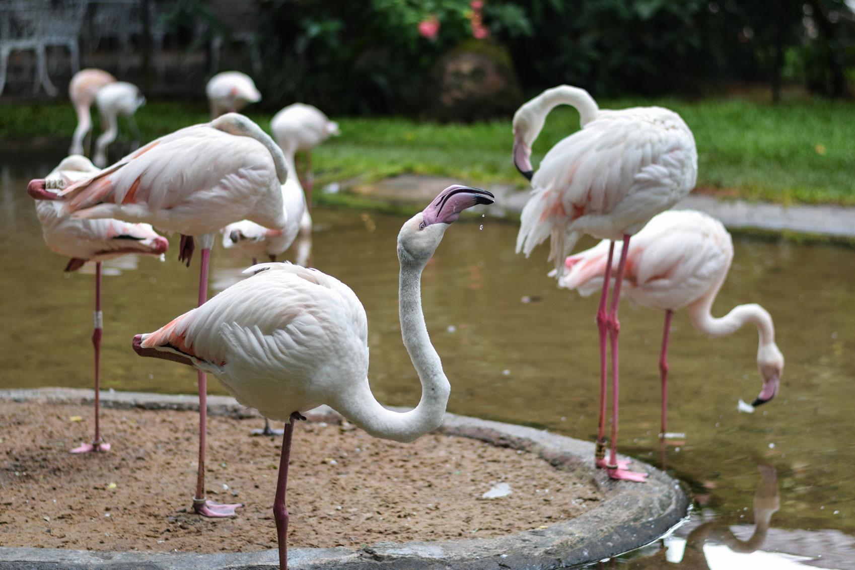 Bird-Park-10.jpg