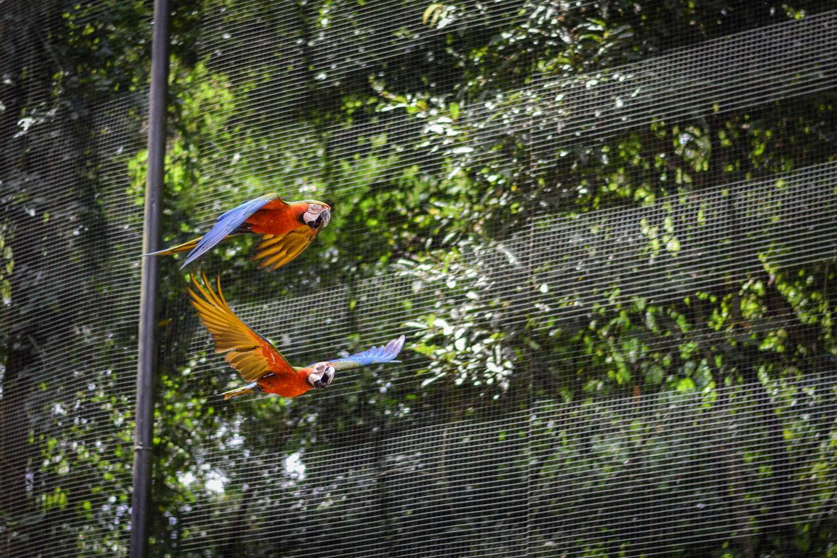 Bird-Park-24.jpg
