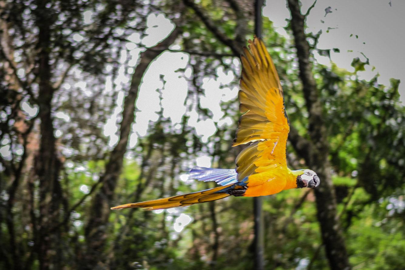 Bird-Park.jpg