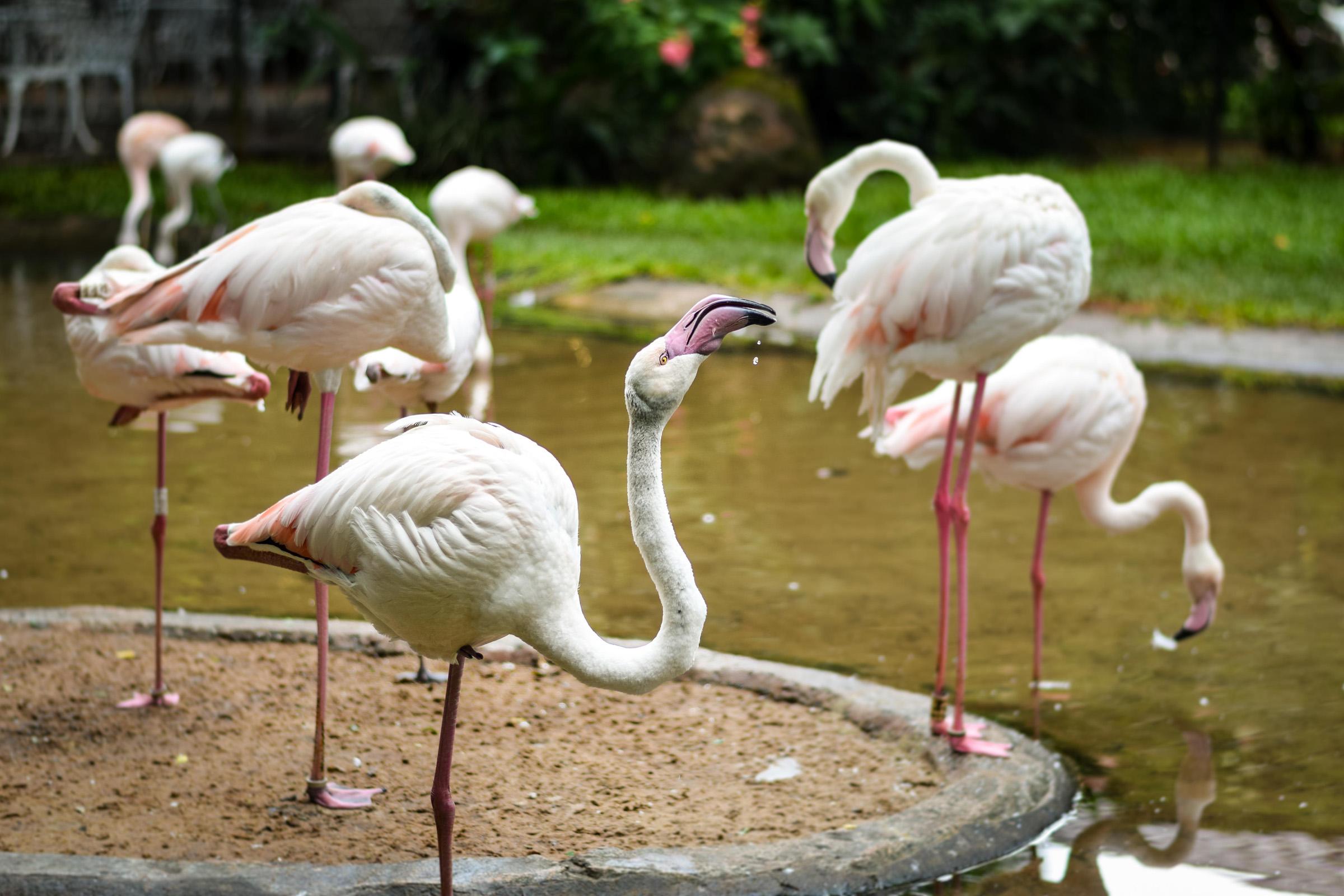 IguazuBirdPark-1.jpg
