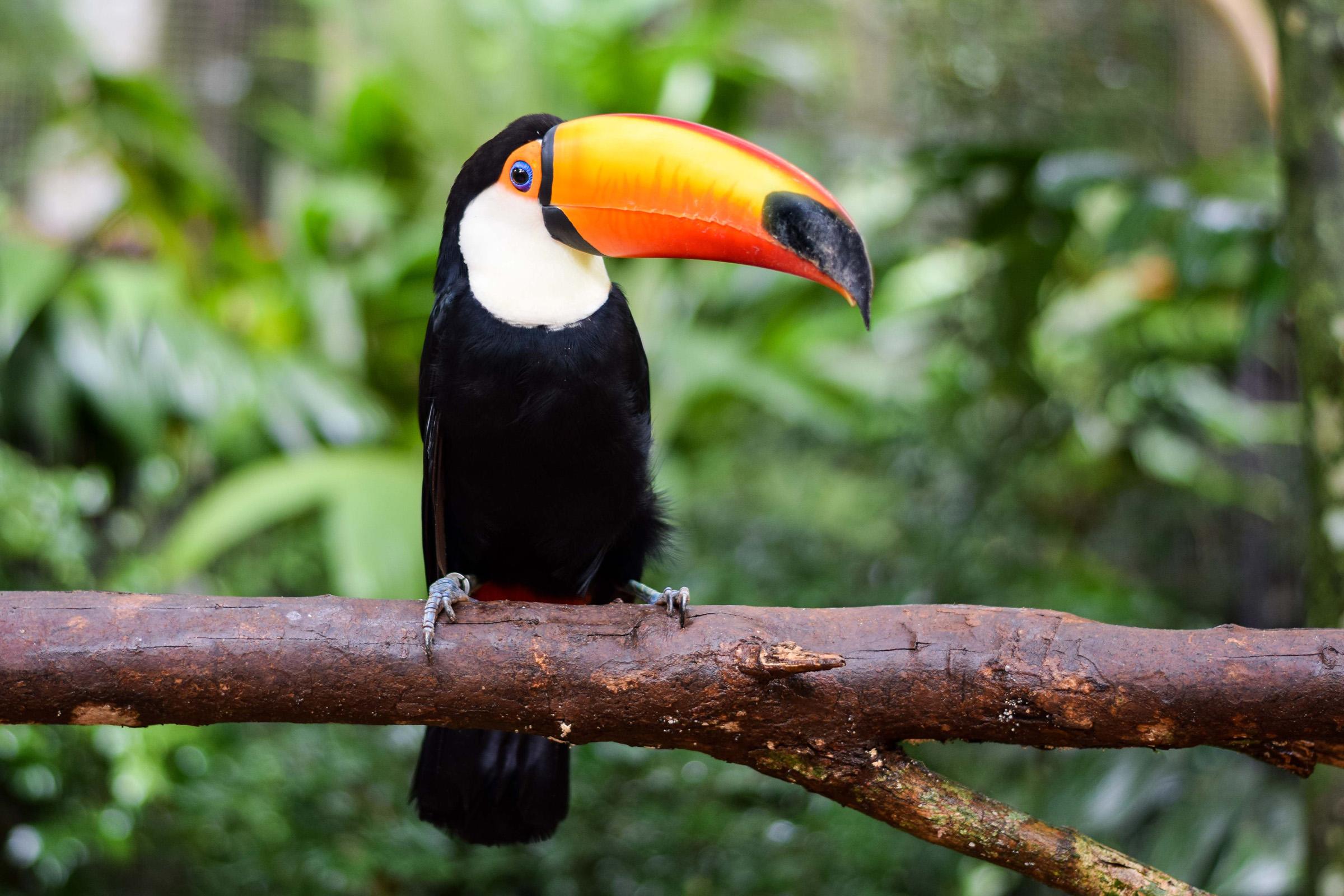IguazuBirdPark-5.jpg