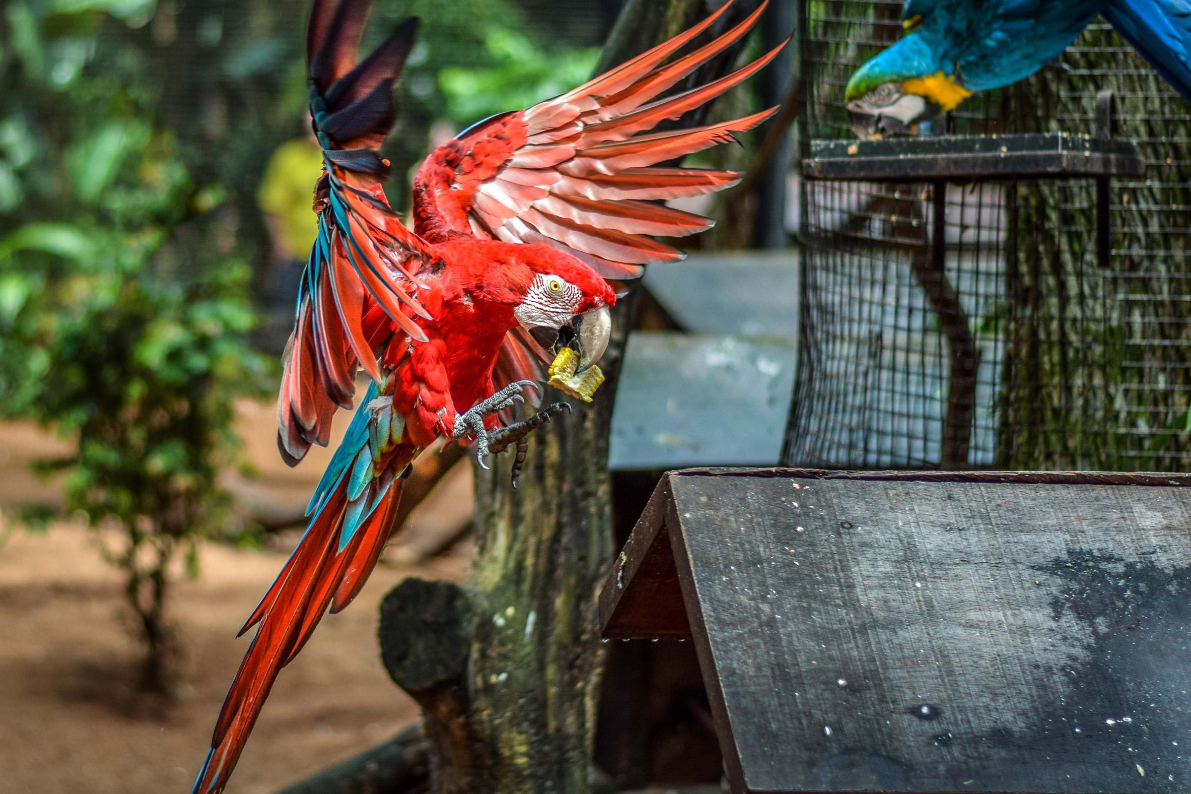 IguazuBirdPark-8.jpg