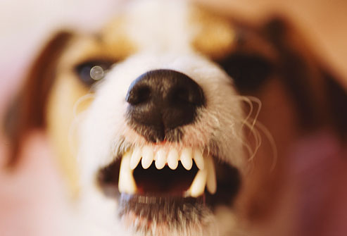 angry dog, anger, will bratt counselling
