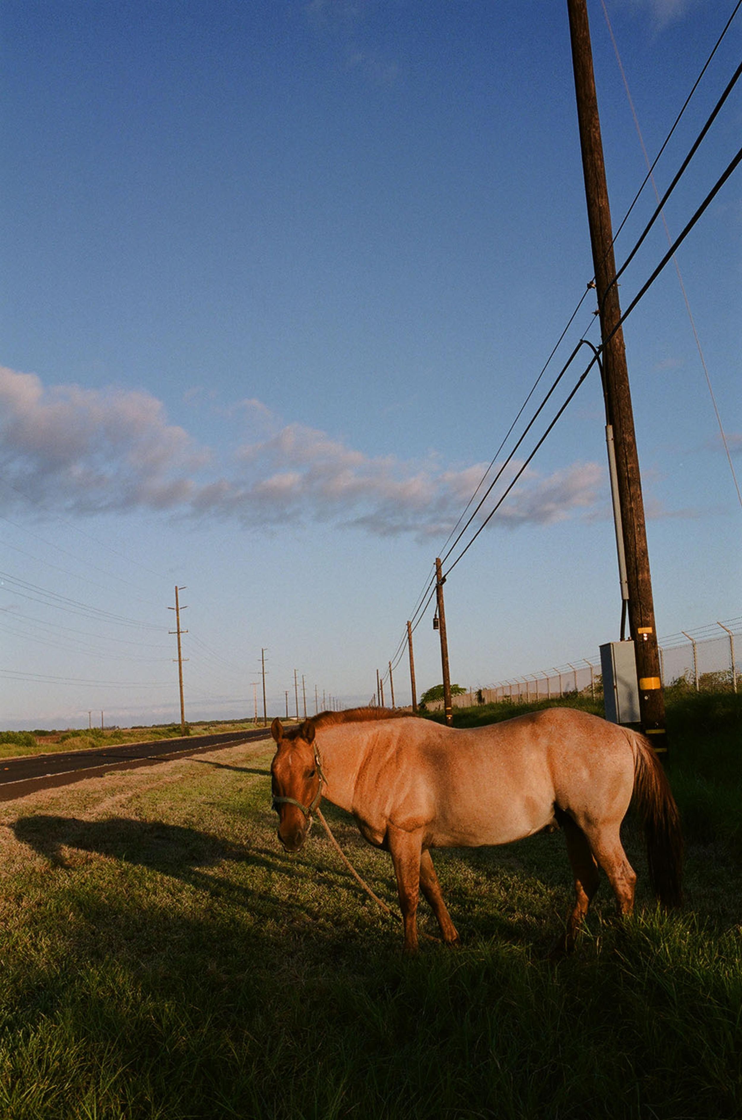 3.horse.jpg
