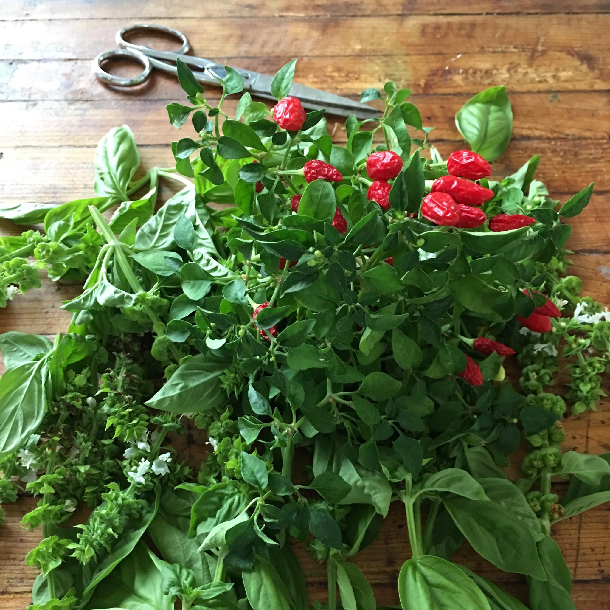 Fresh herbs from the farm.