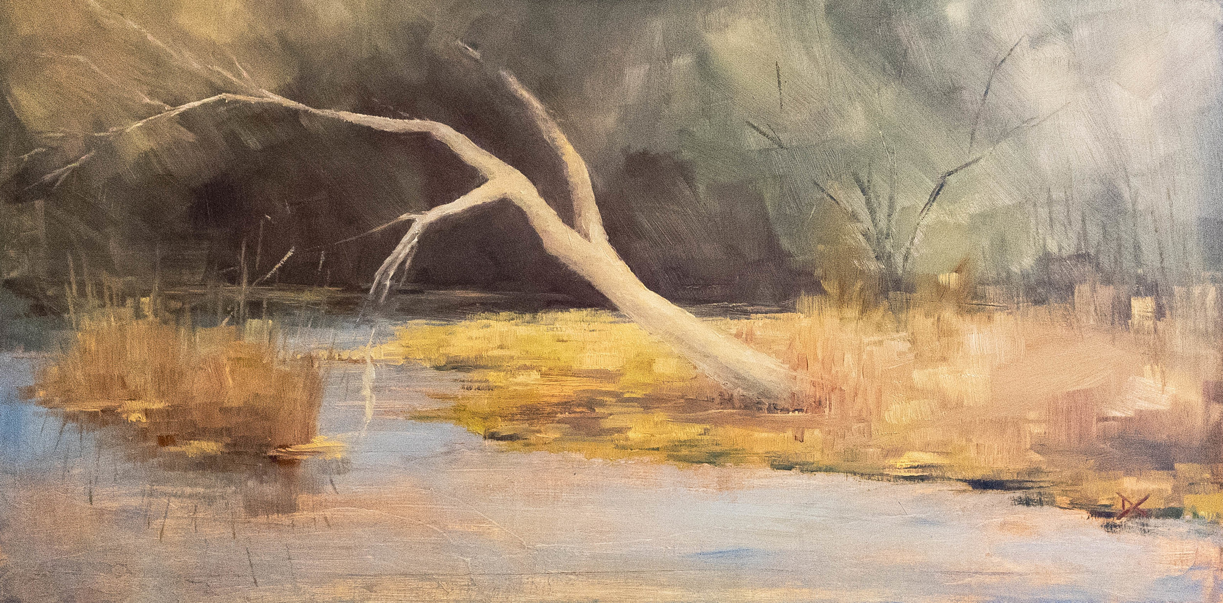 The Bleached Tree.  Brandywine River, Pennsylvania.  Oil on panel, 12 by 24 inches.