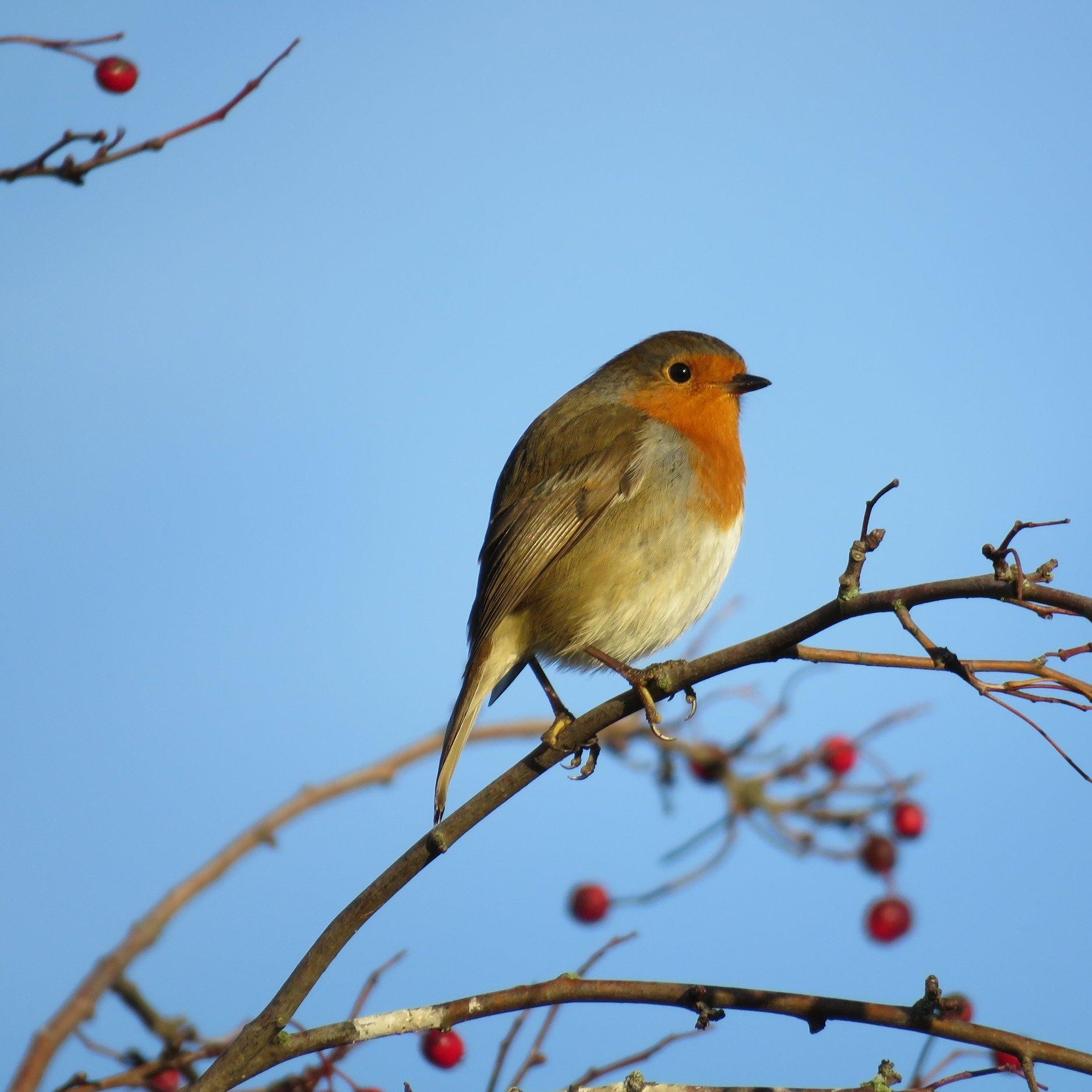 red-throat-bird-against-blue-sky.jpg
