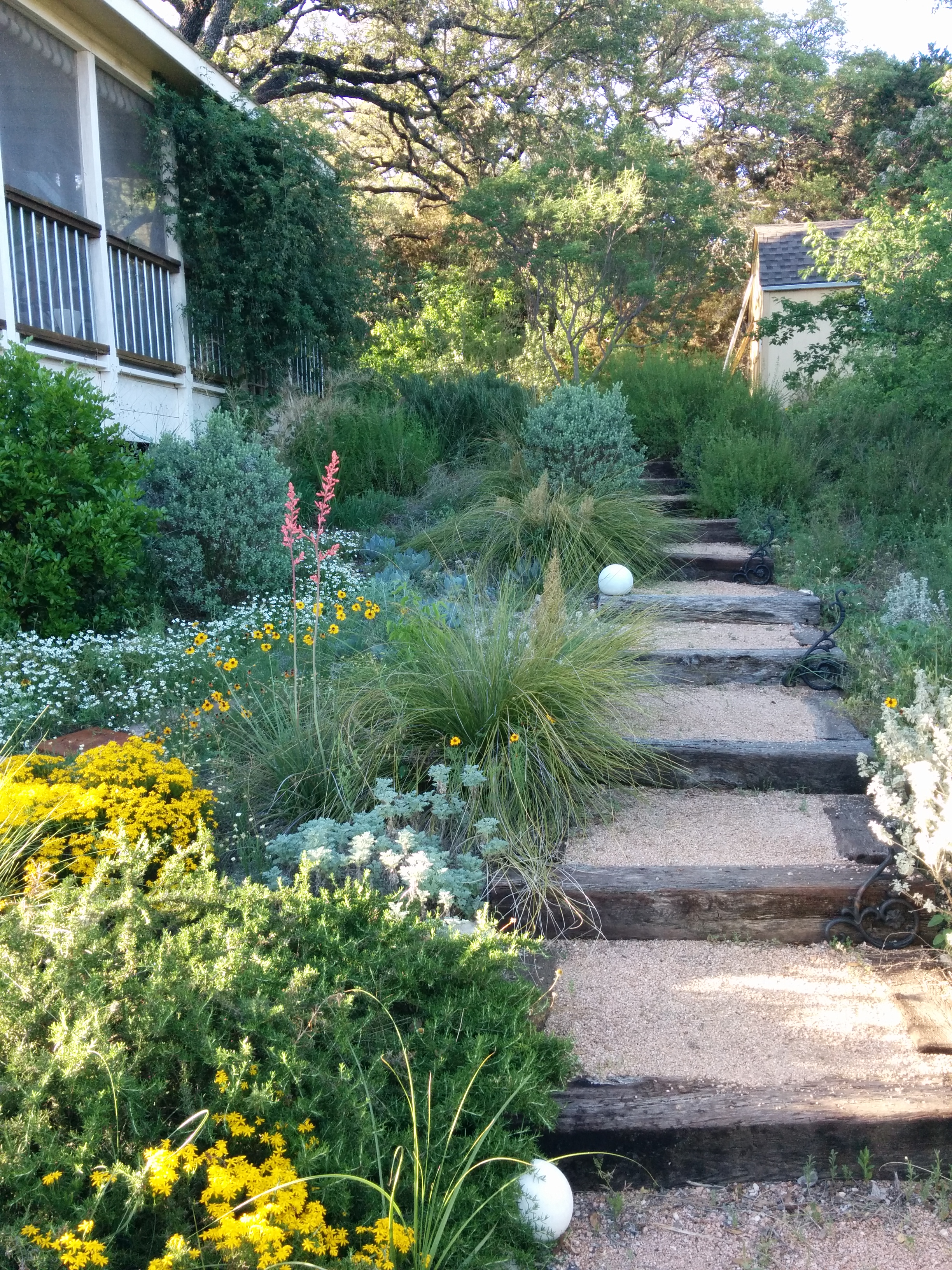 Secondary steps on hillside with mixed Texas native plants and shrubs