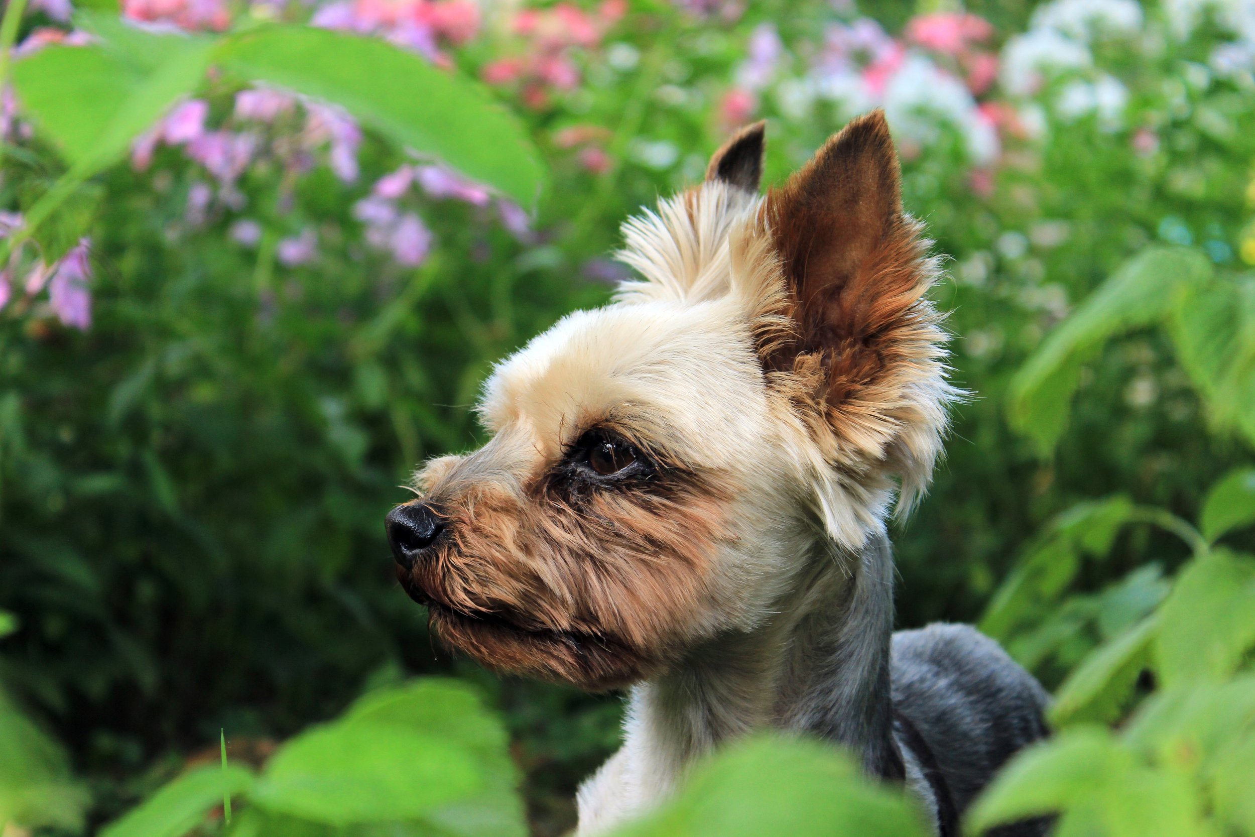 Landscape design - an aging in place garden for your dog