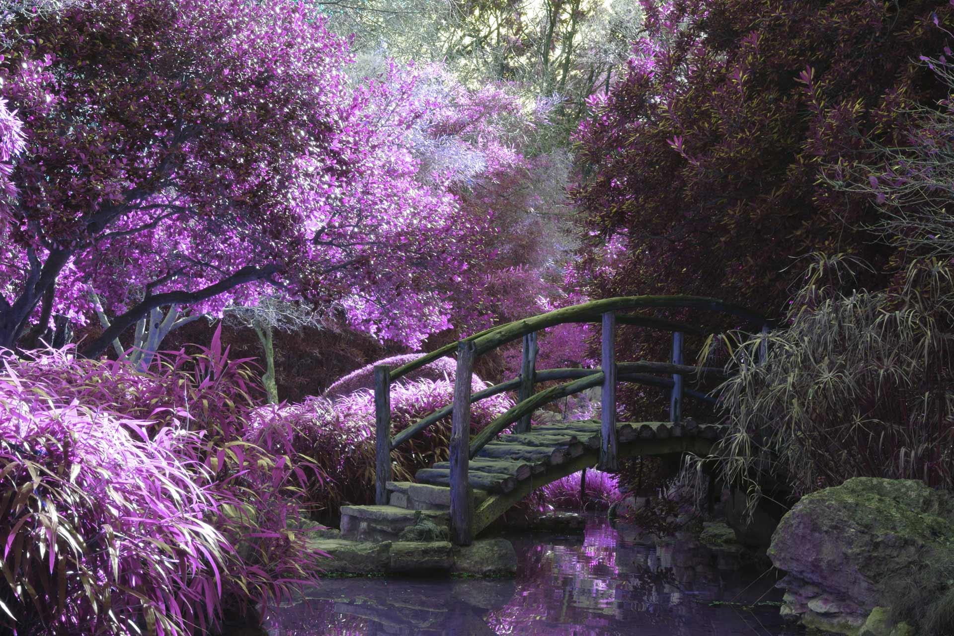 Using Color In A Garden