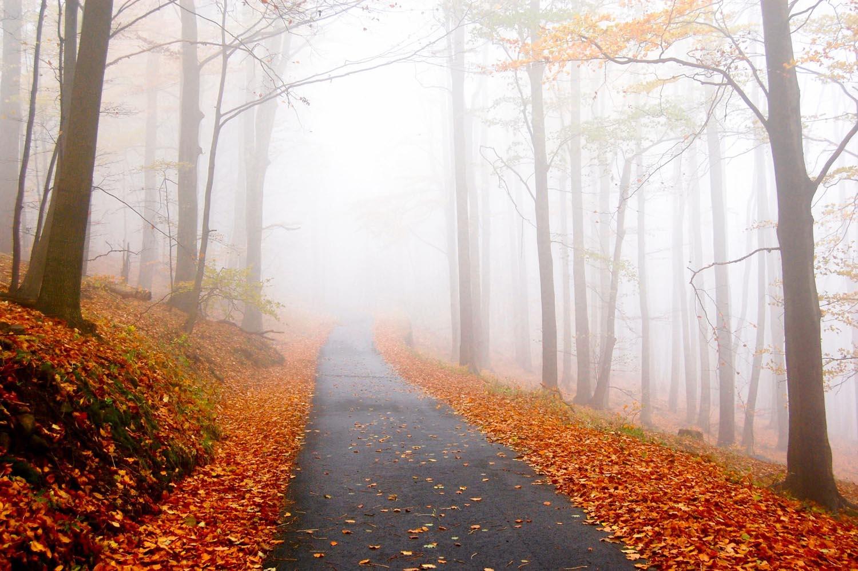 road_in_foggy_woods_in_autumn.jpg