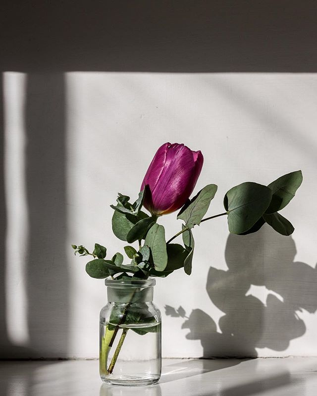 Winter sunshine with a bit of spring!. . . #tulips #flowers #sunshine #london #shadows #light #winter #sunshine #photography #londonphoto #spring