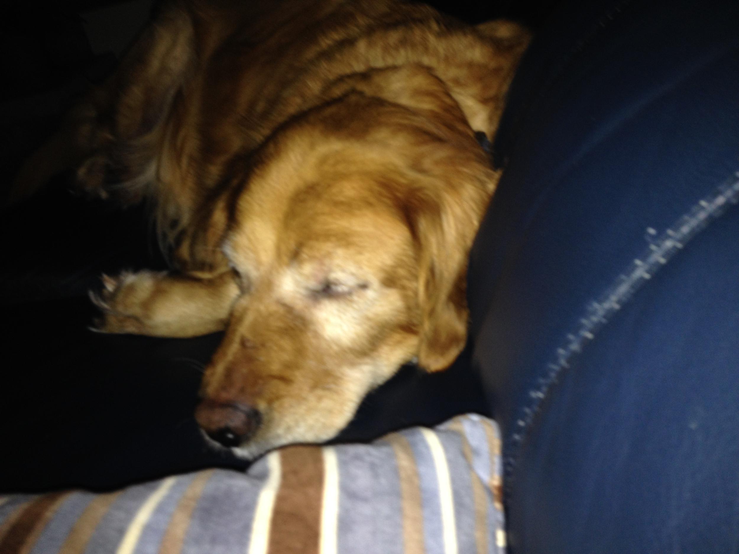 Brandy on couch 2.JPG