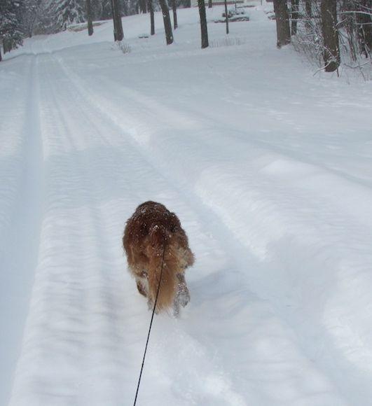 murph+run+snow_1.jpg