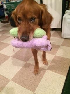 Buddy+toys.jpeg
