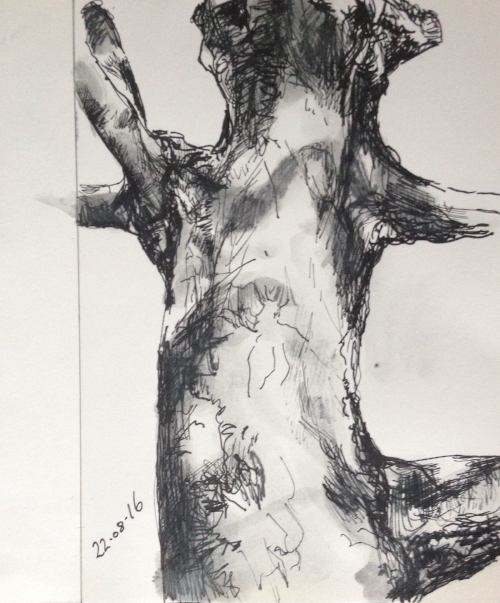 KIRSOPP-treebranches.jpg