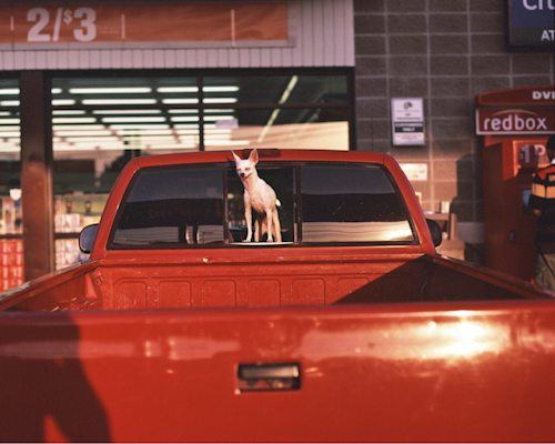 "Dallas, Texas,  Andrew Williams    Color Photography, 11""14"""