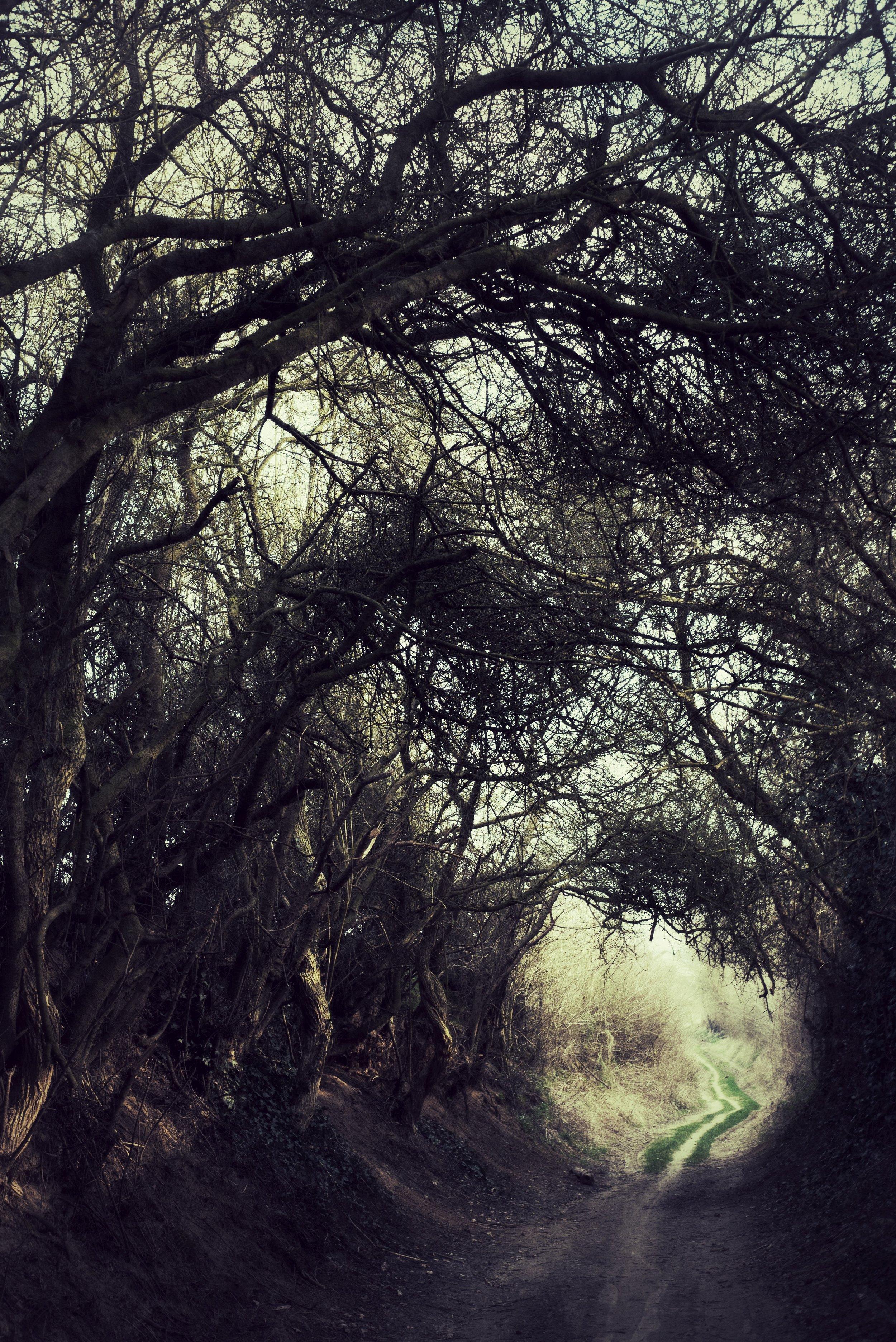 DSC04957_Snapseed.jpg