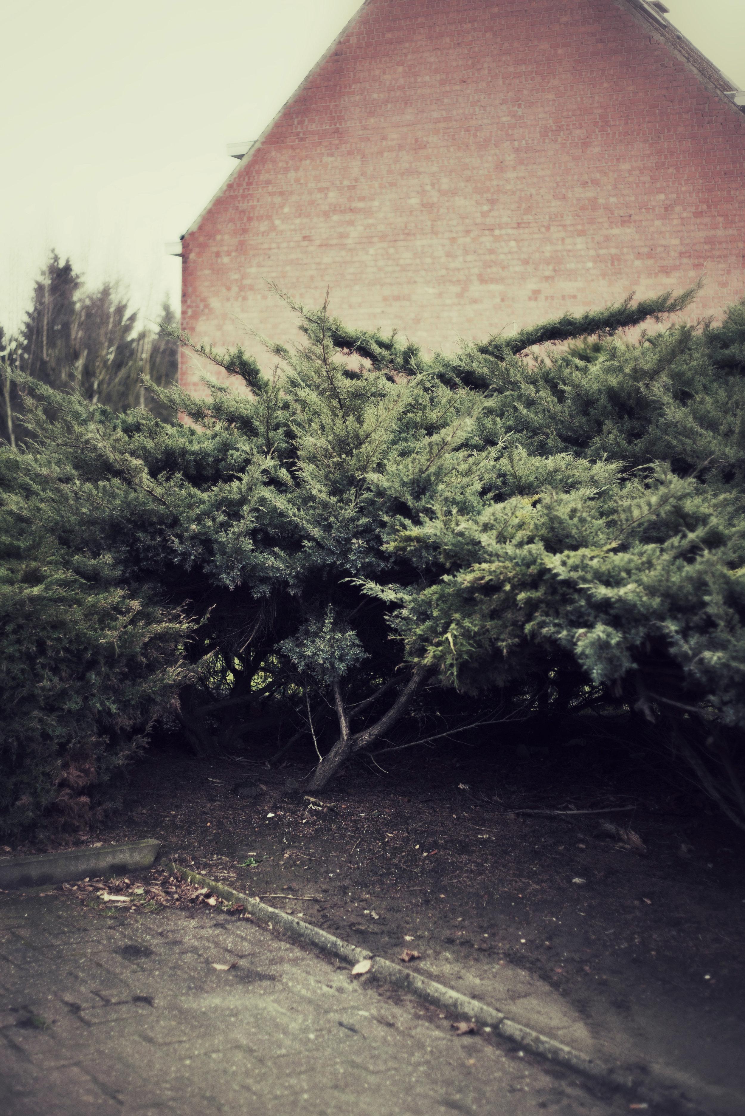 DSC05053_Snapseed.jpg