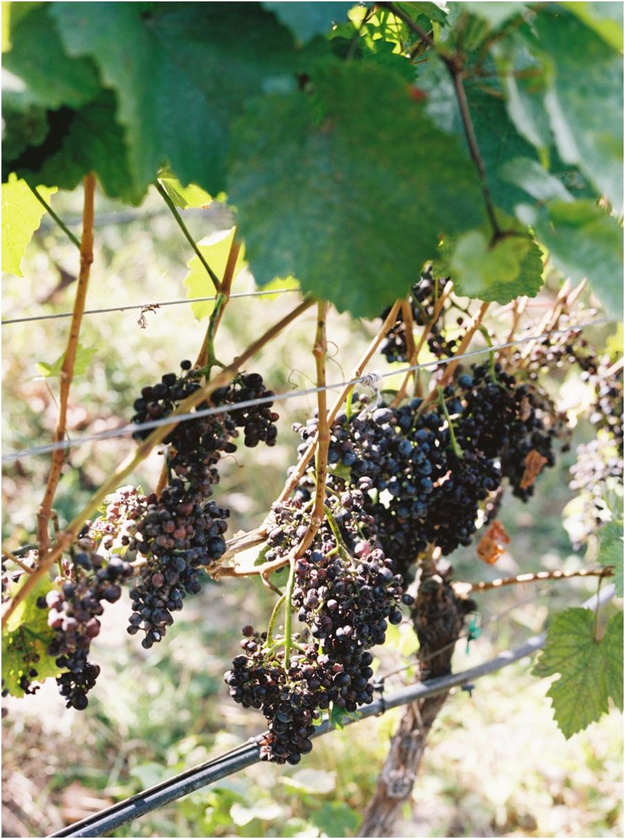 summerhill winery kelowna_0786.jpg