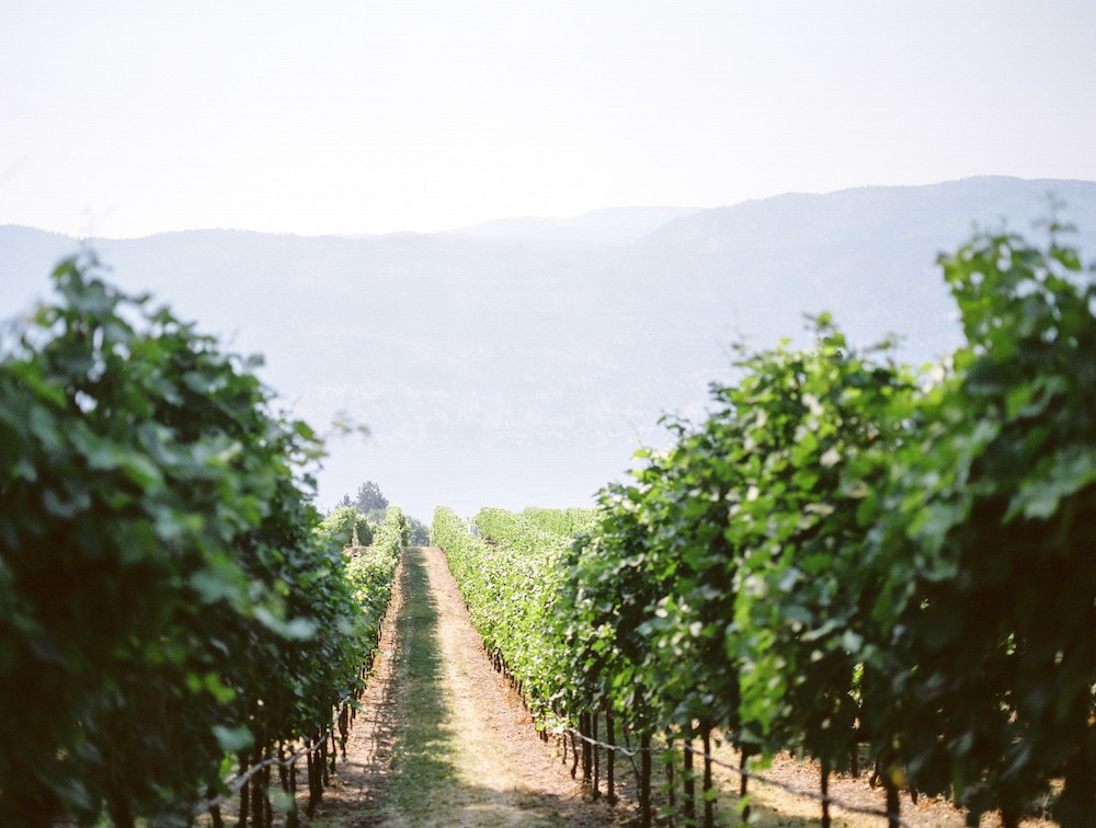 lakecountry wedding winery.jpg