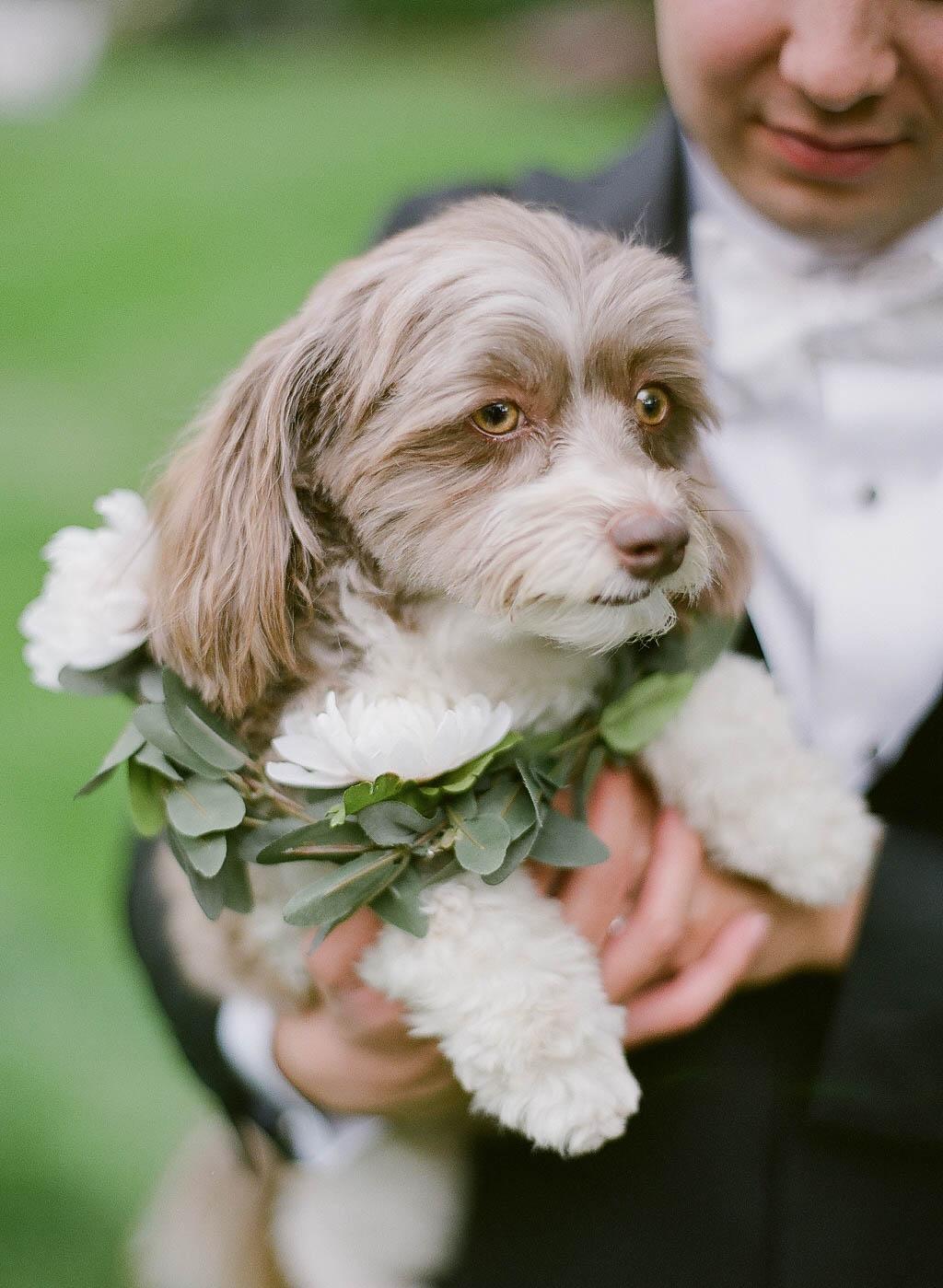 dog wedding floral collar.jpg