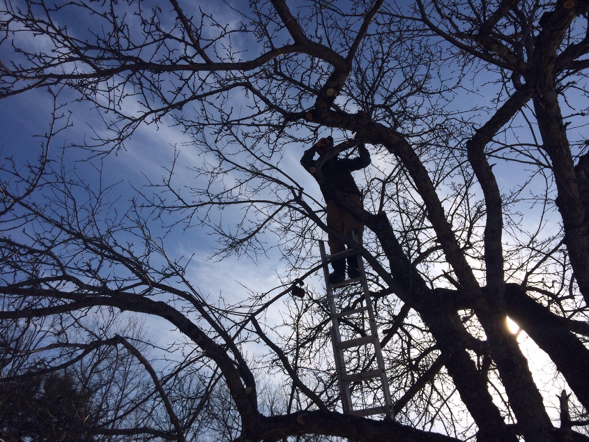 Mike took this shot of Matt in the tree.