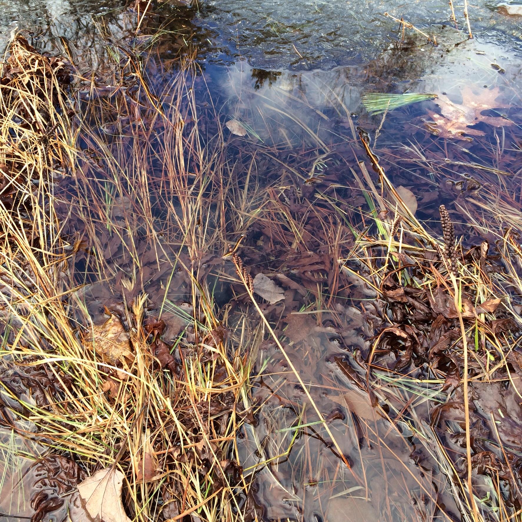 The shoreline post ice melt.