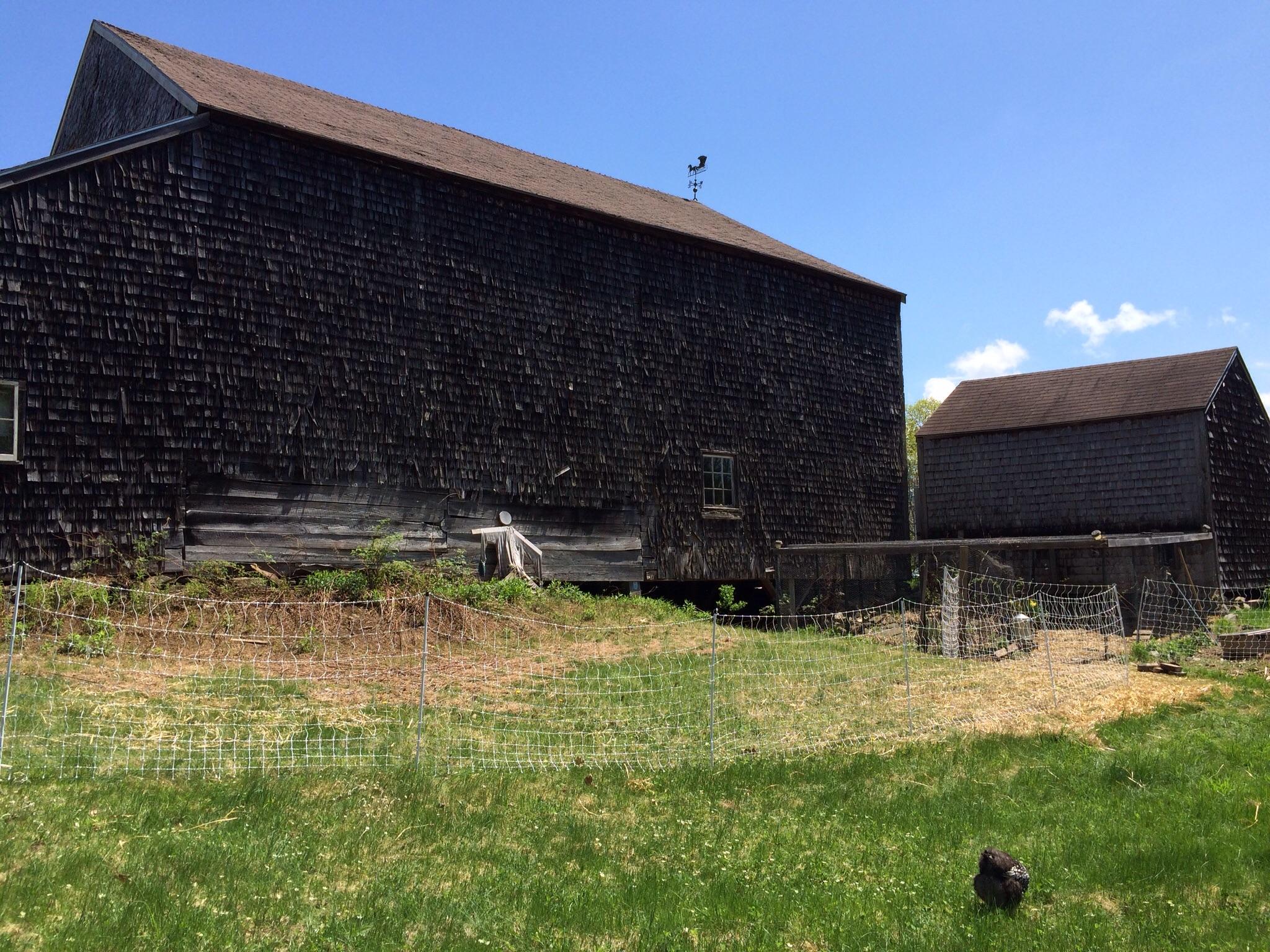 One small chicken. One big barn