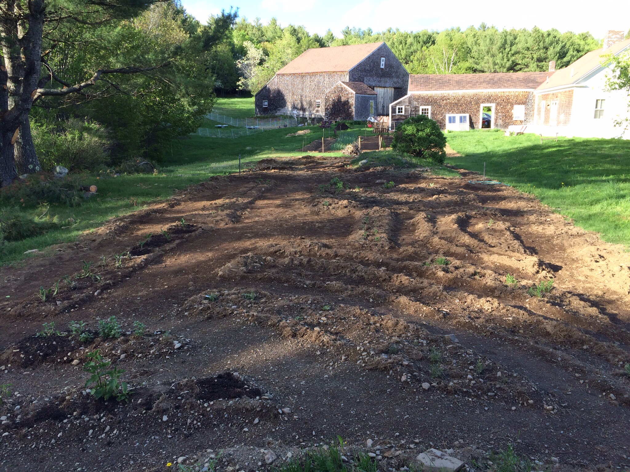It may be difficult to make out in the picturebut the medicinal herb garden beds are laid out in a fancifulpattern bothto make harvesting easy and to allow for some meditative herb walks once everything has grown in.