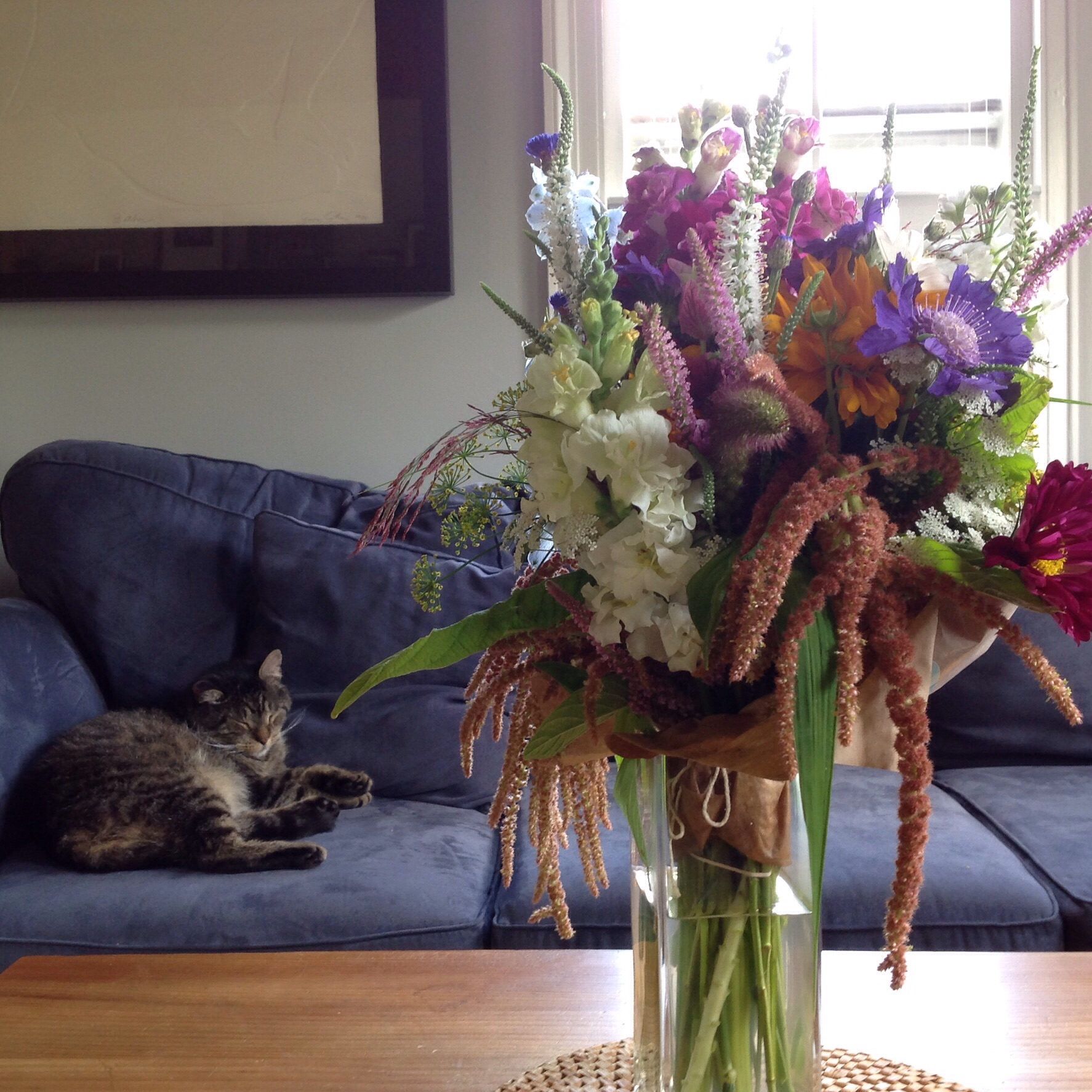 Sleepy Fozzie and a bouquet of local cut flowers to bring summer's many colors indoors.