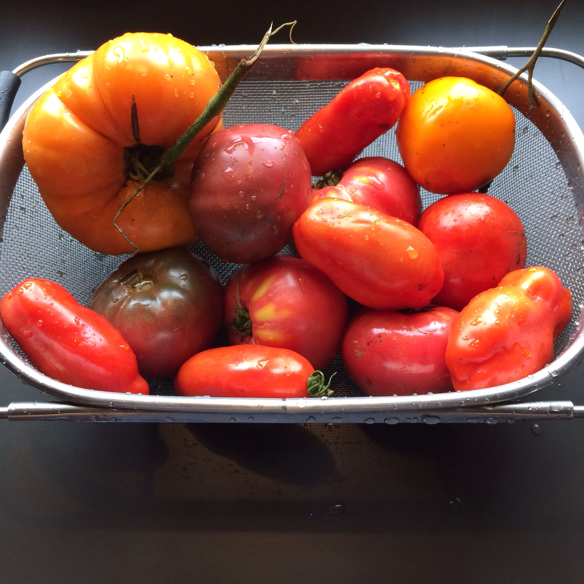 Some of these beauties became salsa, some were roasted in the oven, and others went into sauce.