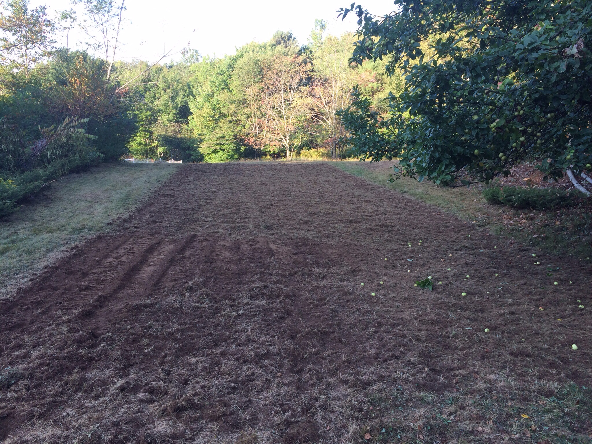 Thanks to our friend Joel of Wild Miller Gardens here in Palermo we have a new tilled garden plot for next summer back behind the barn. It's about 20x70. We'll use this for growing more vegetables in the future as well as larger plantings of perennial herbs like calendula and comfrey for Ridge Pond Herbals products. The apple on the right is the third mature apple we inherited with the farm. This one is most definitely a cider apple as the taste on its own is extremely tannic.