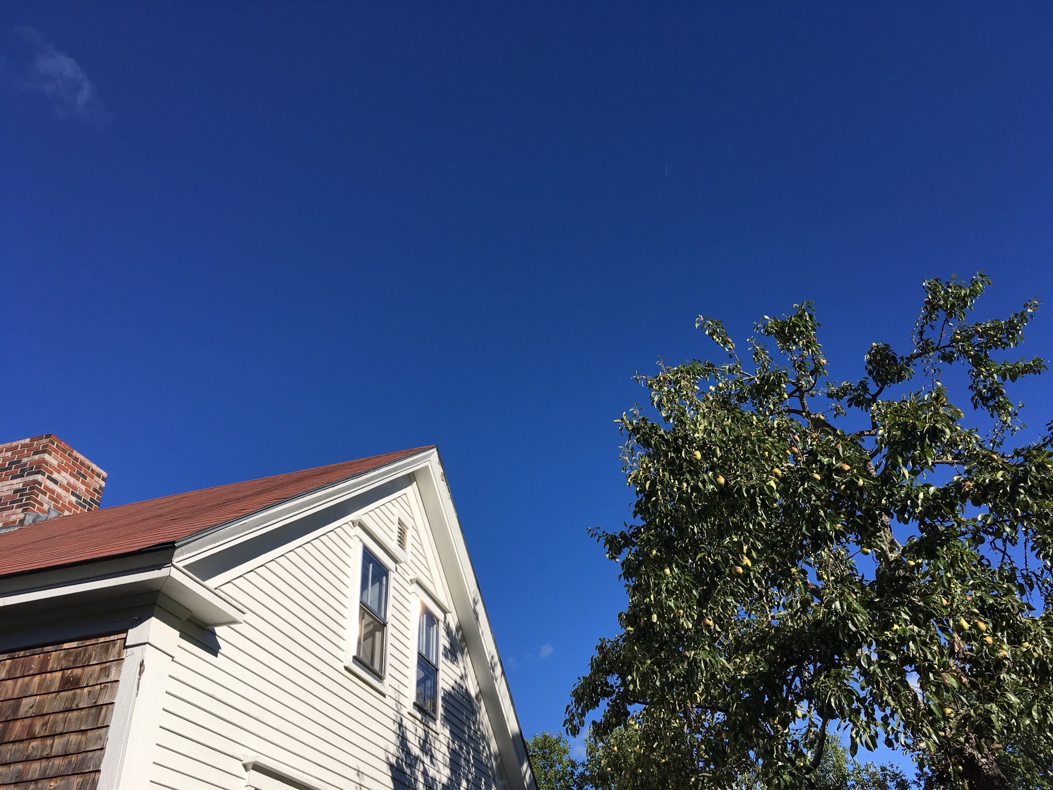 End of August sky looking up at the house and pear tree. Lots of pears for giraffes up there.