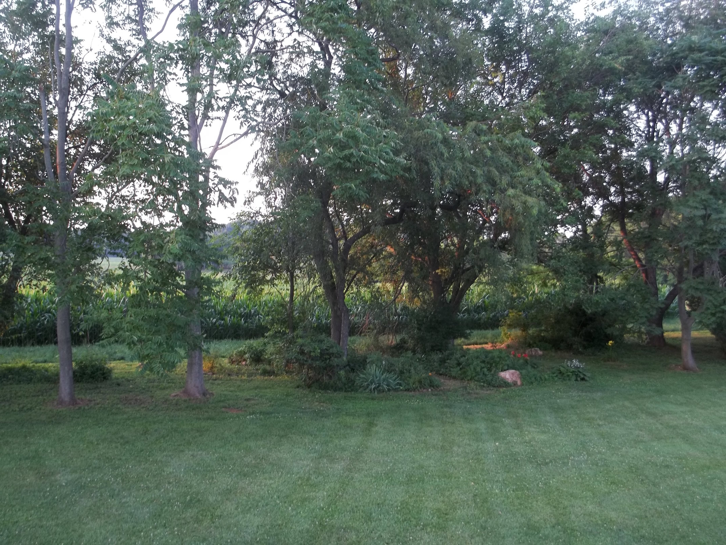 The backyard 'after' shot.
