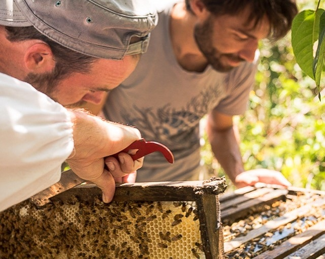Bee Boys - Honeybee inspired natural products, made by beekeepers with organic and Island ingredients.Kevin and Ryan808-987-7416kevin@beeboys.org