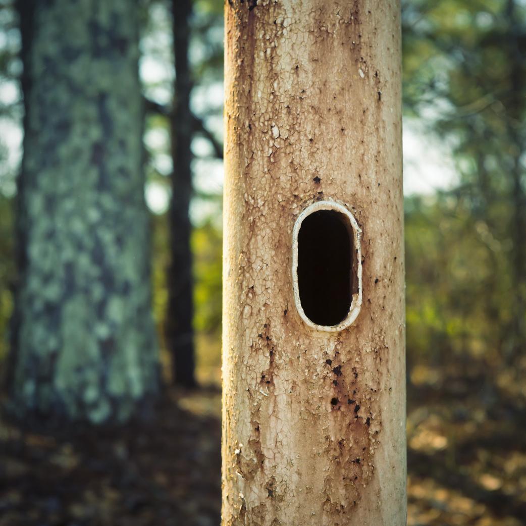 Holes for Peeping 2 - resize.jpg