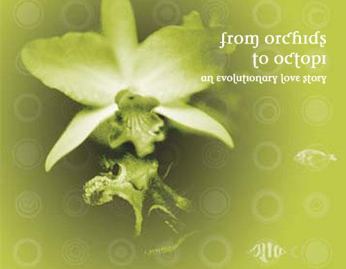 orchids_web.jpg