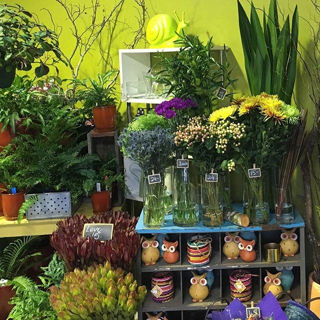 Fresh flowers and ferns fill our shop today! #marketfreshflowers #ferns #winter #wombathillnursery&florist #daylesford