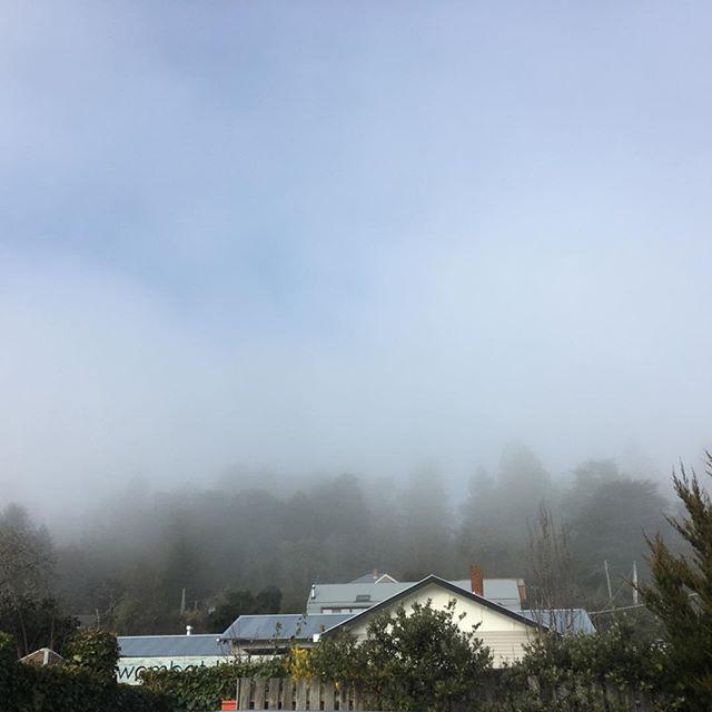 This morning. #fog #wombathillbotanicalgardens #wombathillnurseryandflorist #winter #daylesford