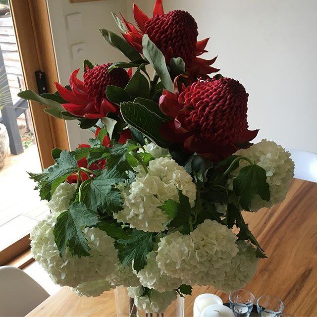 Enjoying flowers at home! Locally grown #waratahs #snowball. Fresh in store today! Happy Thursday 🙂. #wombathillnurseryandflorist #daylesford
