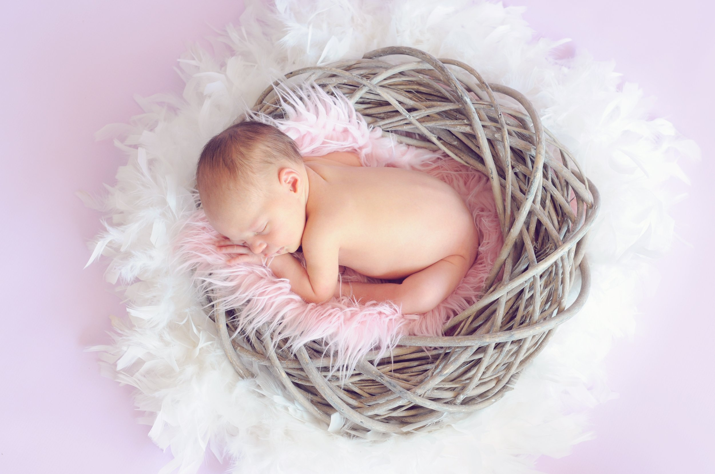 Newborn baby in a nest of twigs and fluff