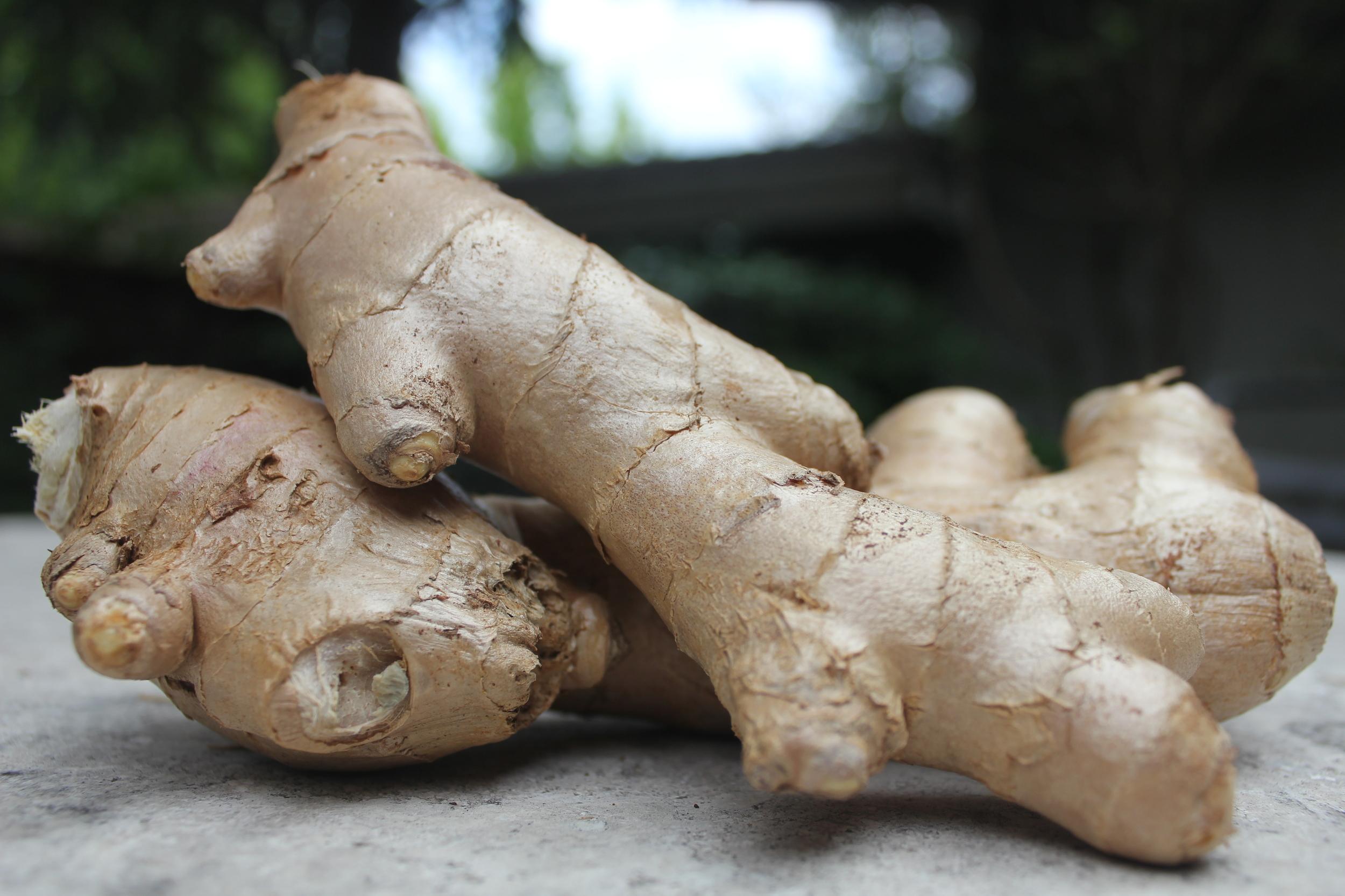 Fresh Ginger_Model4greenliving